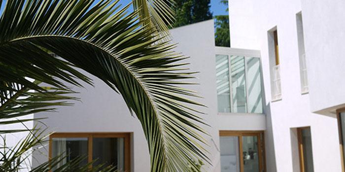 palmier maison beton comtemporaine